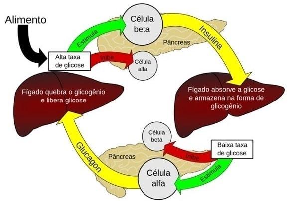 diabetes diabetico hipoglicemia 2
