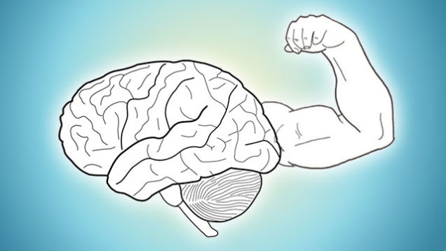Memória Muscular Hipertrofia