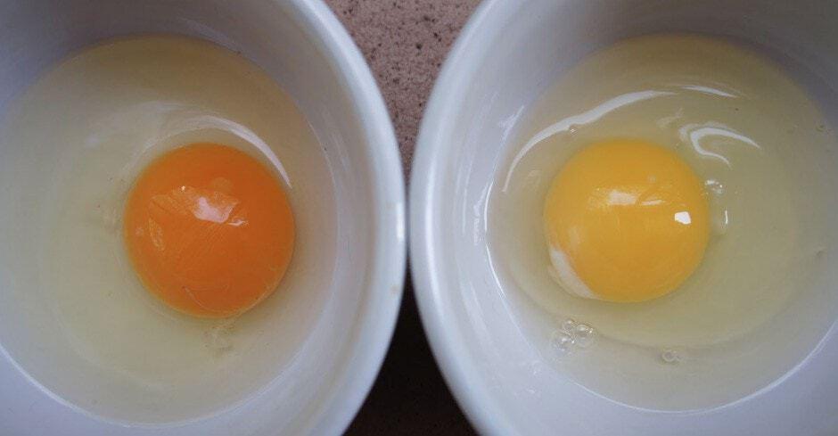 Cor das emas Ovos Caipira e Ovos de Granja