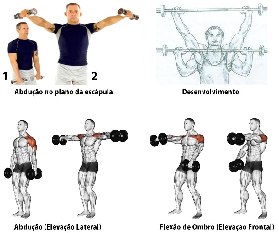 melhores exercicios para o treino de ombros