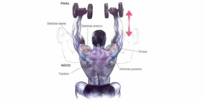 Treino de Ombros SHOULDER PRESS COM HALTERES FIXOS