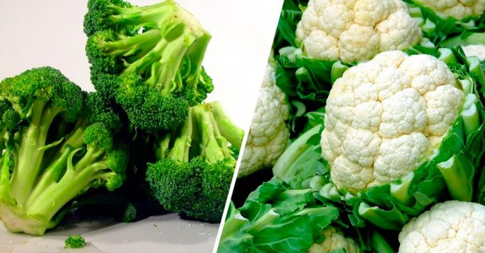 O que é a Vitamina K, para que serve, função, carência, excesso, alimentos, suplementos