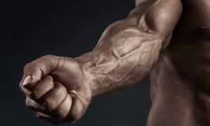 Exercícios para Antebraços: 7 exercícios para dar um Up nos Antebraços (hipertrofia)