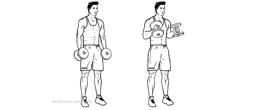 Bíceps Martelo