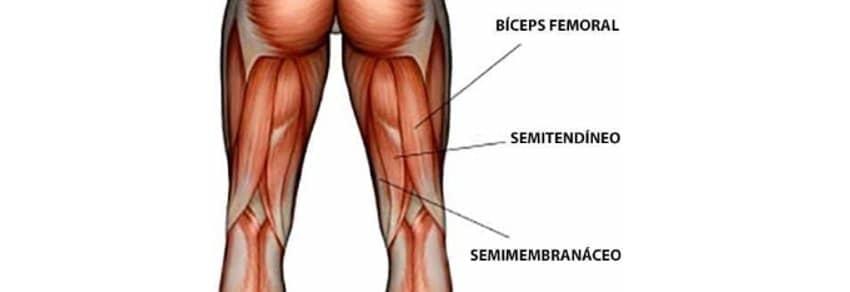 Musculos Pernas Posteior